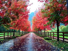 types of willow trees species washington natives - Yahoo Image Search Results