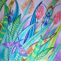 Agave, aloe, moth# tropical wonderland # Millie Marotta