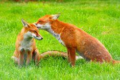 Alps Wildlife | Wildlife Tours | Swiss Animals