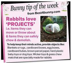 Bunny tip of the week Mini Lop Bunnies, Dwarf Bunnies, Baby Bunnies, Rabbit Toys, Bunny Toys, Bunny Rabbit, Rabbit Life, House Rabbit, Hunny Bunny