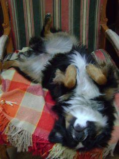 "its called ""upside-down sleeping"""