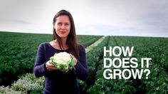 Nicole CotroneoJolly - How Does it Grow? Cauliflower
