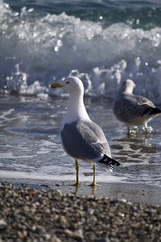 Gulls | Flickr - Photo Sharing!