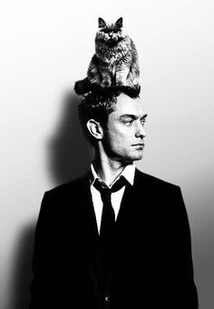 Jude Law cat on head Jude Law, Crazy Cat Lady, Crazy Cats, I Love Cats, Cool Cats, Celebrities With Cats, Celebs, Men With Cats, Animal Gato