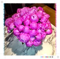@LedgeDancer: Love the peonies all over @Knoll_Inc #neoconography #neocon13