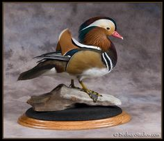 Birdman Studios Waterfowl Taxidermy * Upland & Bird Taxidermy * Duck Mounts * Goose Mounts *Birdman Studios by Todd Huffman * Upland & Bird Taxidermy