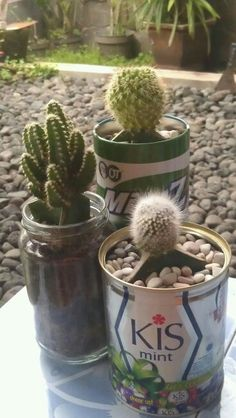 Cactus-can