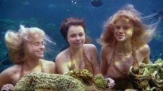 Resultado de imagem para Mako Mermaids