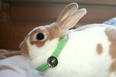 Bonny Bunny House Collar in 'Wild Sherbert' by PurrlsOfDelight, $7.00