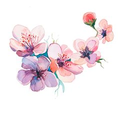 Flower Drawings Art Print: The Spring Flowers Watercolors Isolated on the White Background by la_balaur : - Water Drawing, Plant Drawing, Watercolor Flowers, Watercolor Paintings, Watercolours, Presets Photoshop, Blossom Tattoo, Fabric Painting, Flower Tattoos