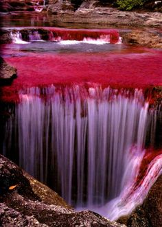 The River of Five Colors, Caño Cristales, Colombia
