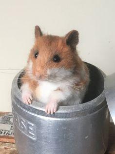 Needle Felted Hamster,Felted Animal,Handmade by MorrisonArtCreations on Etsy