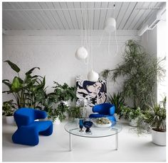 Set the stage. When architect + interior designer Stephane Chamard moved into a loft in Toronto, he decided it needed an update. The ragged jumble of plants against the stark white backdrop shows a tension, and was also designed by Chamard to represent a winter garden. The plants frame the sitting area + provide a backdrop for the electric-blue vintage Djinn chairs by Olivier Mourgue.  HOUZZ, Annie Thornton