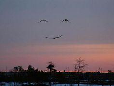 De natuur glimlacht!  Nature is smiling