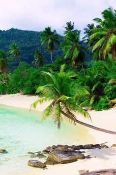White sand beach lined with palm trees along a turquoise sea (by - Tropical destinations Beautiful Islands, Beautiful Beaches, Vacation Destinations, Vacation Spots, Vacations, Places To Travel, Places To Go, All Inclusive Beach Resorts, The Beach