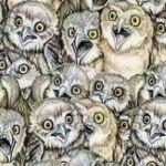 Löydätkö kuvasta kissan joka piilottelee pöllöjen joukossa? – Harva löytää Owl, Bird, Animals, Animales, Animaux, Birds, Owls, Animal Memes, Animal