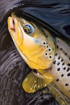 An Awesome Painting Of The Rising Trout