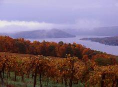 Keuka Lake from Keuka Lake Vineyards, Finger Lakes region, NY Finger Lakes, Upstate New York, Taste Of Home, Art Boards, Garden Landscaping, Vineyard, Things To Do, Cities, Gardening