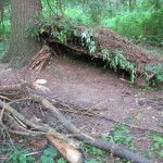 Video: Emergency Natural Shelter Built With No Tools