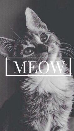 Meow Cute Cat iPhone 6 Wallpaper and like OMG! get some yourself some pawtastic adorable cat apparel!