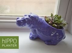 I love this hippo planter, especially since it was a rescue/repaint. FYI--If anyone sees any cute animal planters, let me know!