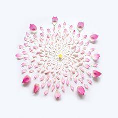 Disassembled flower