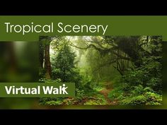 Fitness Journey Tropical Scenery - Video For Reduce Stress To Get You Th. Virtual Run, Virtual Field Trips, Virtual Travel, Virtual Museum Tours, Reduce Stress, Walking Tour, Places To See, Scenery, Journey