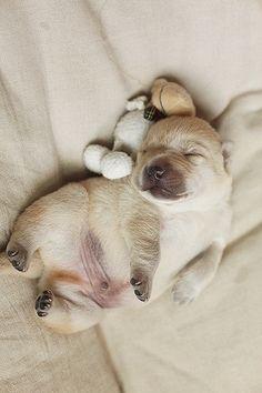 So So Cute ,I Want You :-)