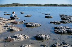 2000 year old Stromatolites (fossils) at the beautiful Lake Thetis, Cervantes, Western Australia