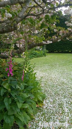 Foxglove and cherry blossoms. Cherry Blossoms, Stepping Stones, Outdoor Decor, Garden, Plants, Home Decor, Gardens, Homemade Home Decor, Garten