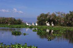 Pelicans on Lake Naivasha, Kenya - BelAfrique your personal travel planner - www.BelAfrique.com