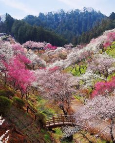 visitheworld:  Beautiful gardens at Yoshino-Baigo, Ome / Japan (by Seima).