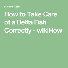 How to Take Care of a Betta Fish Correctly - wikiHow