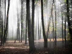 Au bois des Elfes Photo D Art, Les Oeuvres, Photos, Plants, Elves, Artists, Fall Season, Woodwind Instrument, Photography