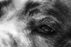New Photo: A Dogs Eye View