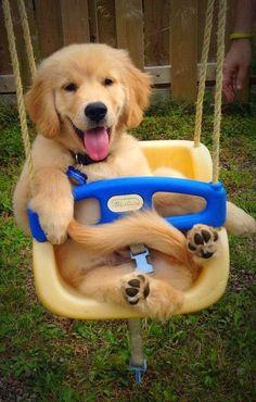smiling #Golden #Retriever puppy:
