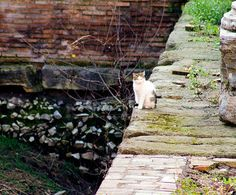 Torre Argentina - Roman Cat Sanctuary | Atlas Obscura