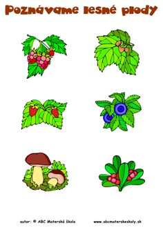 Poznávame lesné plody - Rozprávame a dopĺňame slovnú zásobu