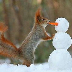"Gefällt 5,155 Mal, 89 Kommentare - Life in Planet (@lifeinplanet) auf Instagram: ""Little squirrel building snowmanl photography by ©Vadim Trunov #lifeinplanet"""