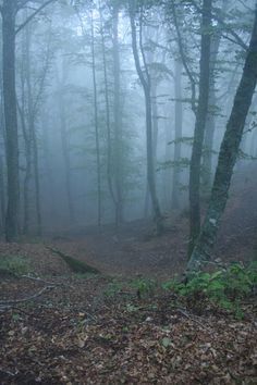 Misty day in the woods behind the monastery built where St. Francis received his stigmata, Tuscany, Italy.