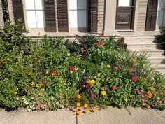 New Orleans cottage garden