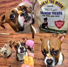 Sara's always on her best behavior for Bark at the Moon Salmon Treats! Click the pin to find out more about these tasty all-natural treats!