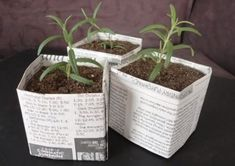 DIY: Newspaper Pots for Seed Starting/Cuttings. Make square seed starter pots! Diy Planters, Planter Pots, Planter Ideas, Growing Tomatoes Indoors, Grow Tomatoes, Paper Pot, Diy Paper, Paper Plants, Mason Jar Sconce