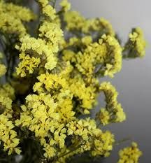 Google image result for httpwholeblossomsimagesyellow yellow statice limonium flowers this board features flowers that are usually available for florists mightylinksfo