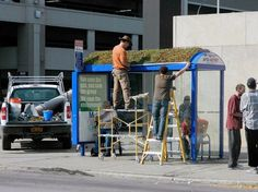 Living Green-Roofed Bus Shelter Pops Up in Downtown Buffalo | Inhabitat New York City