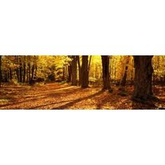 Tree Lined Road Massachusetts USA Canvas Art - Panoramic Images (36 x 12)