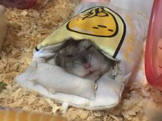 布団で寝るハムスター Super Cute Animals, Cute Funny Animals, Cute Baby Animals, Funny Cute, Animals And Pets, Hamster Pics, Baby Hamster, Beautiful Cats, Animals Beautiful