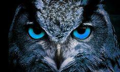 Free Image on Pixabay - Owl, Bird, Nature, Eyes, Animal Free Pictures, Free Images, Image Nature, Owl Bird, Predator, Mammals, Wildlife, Eyes, Instagram