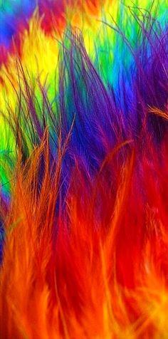 Rainbow feather fan - ©fujiellena  www.flickr.com/photos/22351913@N07/2441432624/