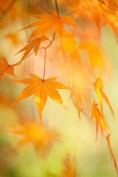 autumn yellow and orange